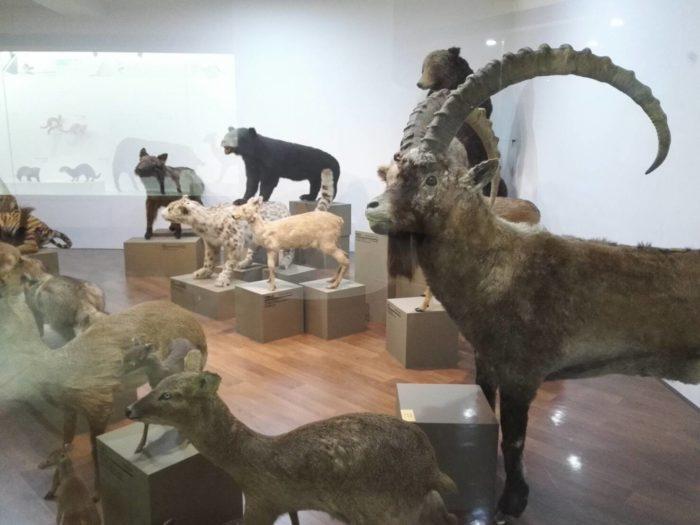 慶熙(キョンヒ)大学 自然史博物館
