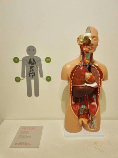 ソウル大学病院医学博物館展示品