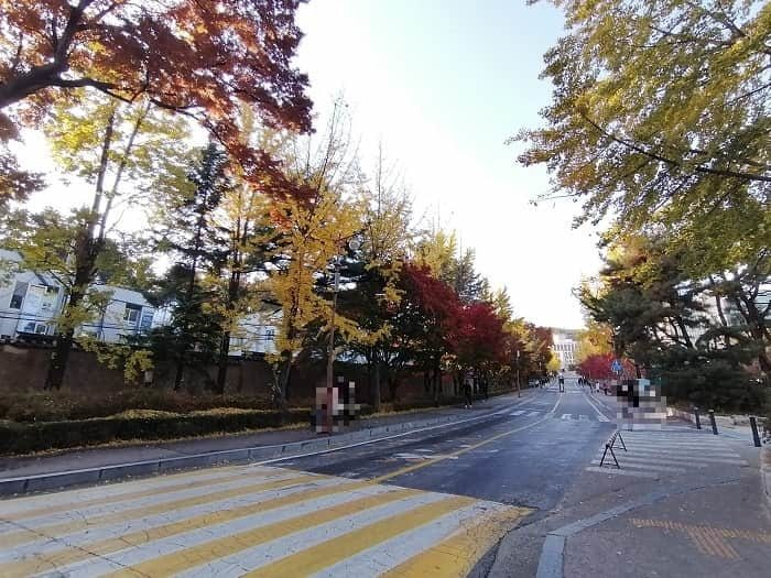 成均館大学 銀杏並木