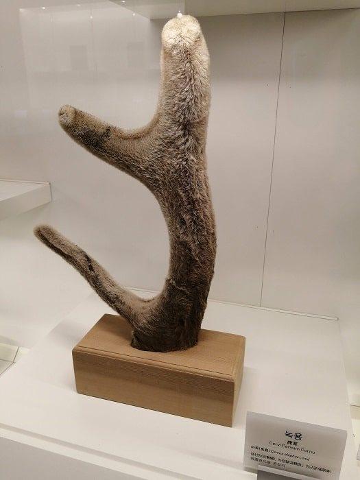 ソウル薬令市韓医薬博物館‗さまざまな韓方(韓国の漢方)薬材料、鹿茸、鹿の角