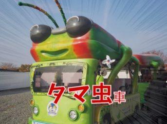 瞻星台(チョムソンデ)タマムシ電気自動車