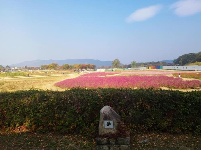 韓国インスタ映えピンクミューリー