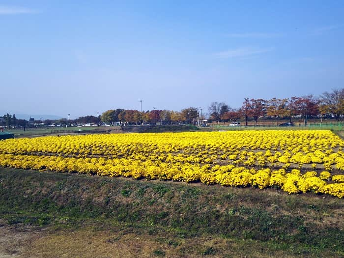 瞻星台(チョムソンデ)花団地