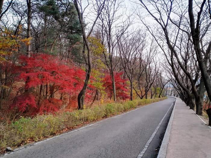 韓国キョンジュ市の紅葉