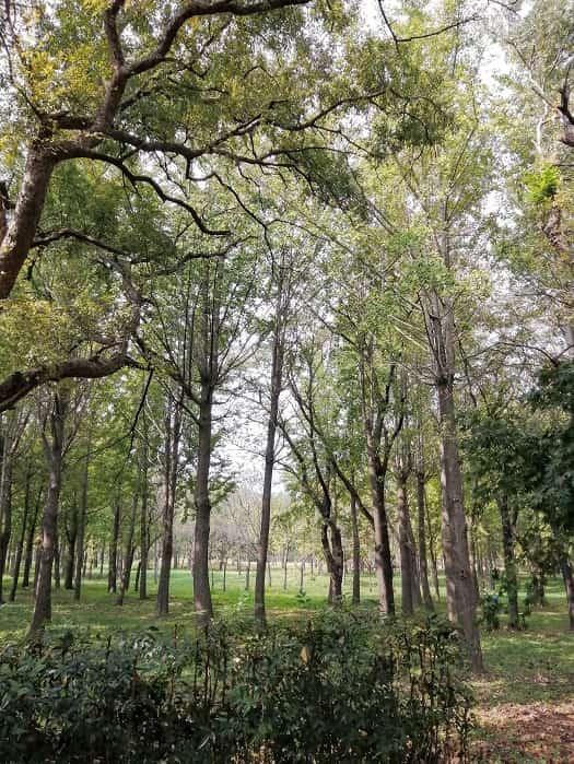 慶州(キョンジュ)隍城(ファンソン)公園
