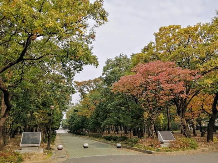 慶州ファンソン公園の紅葉