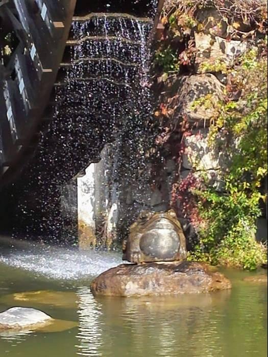 慶州普門観光団地の水車広場のカエル