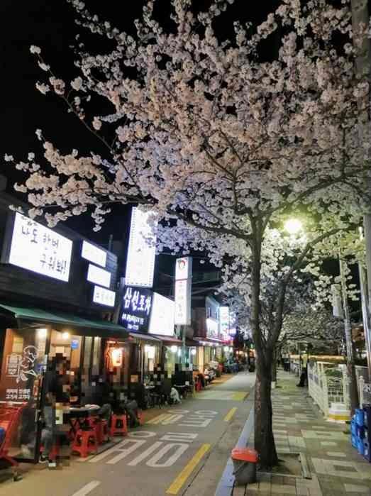韓国ソウルお花見スポット