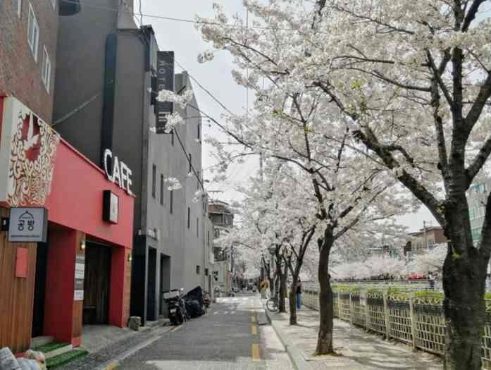 韓国ソウル サクラの名所