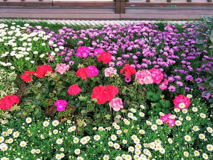 ソウルのお花見スポット
