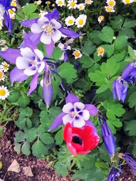 ソウルお花見と散策スポット