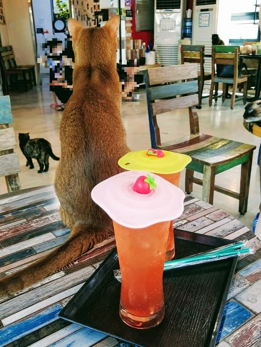 ソウルの猫カフェ