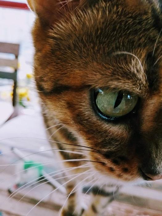 韓国のさわれる猫カフェ