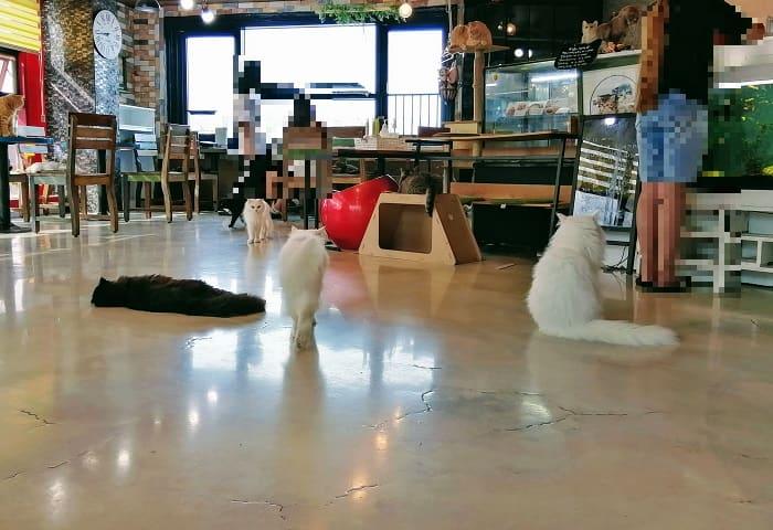 韓国の猫カフェ抱っこ