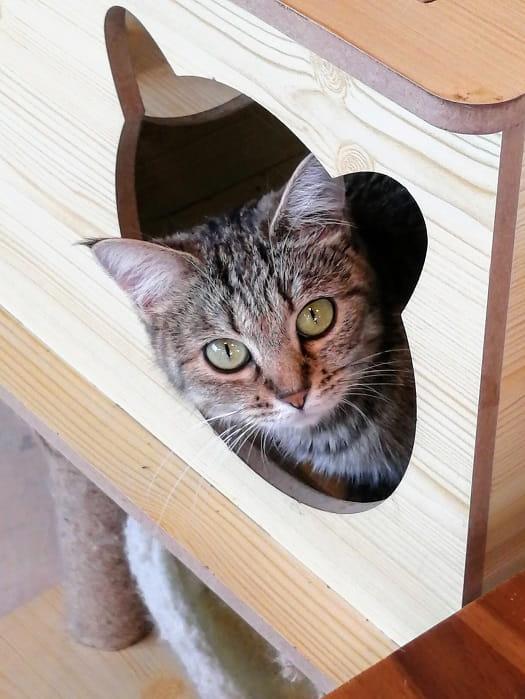 韓国の猫カフェ抱っこキャットタワー