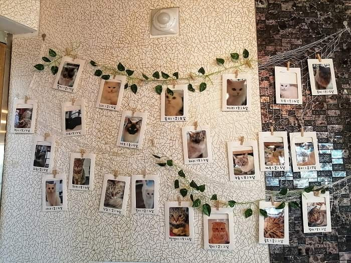 韓国ソウルで猫と遊べる場所