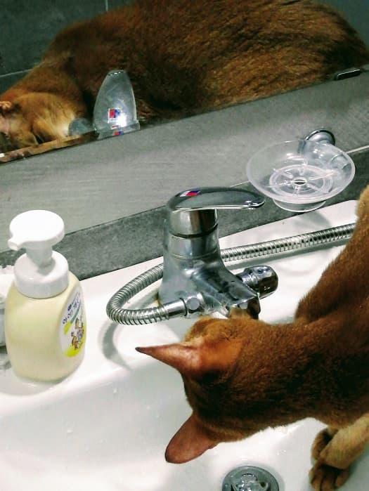 韓国のトイレ事情