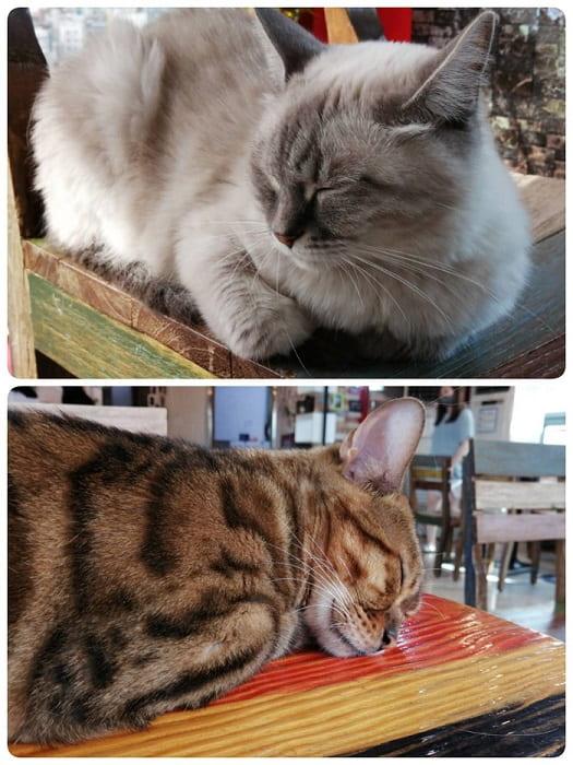 ミアサゴリ猫カフェ