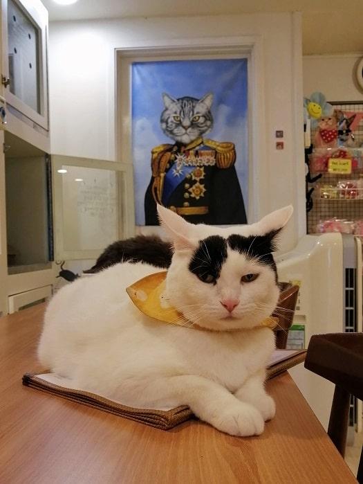 ミョンドン고양이놀이터(コヤンイノリト)ネコカフェ