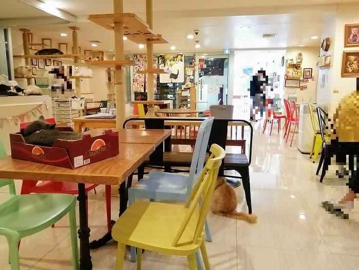 韓国ミョンドンの猫カフェ コヤンイノリト
