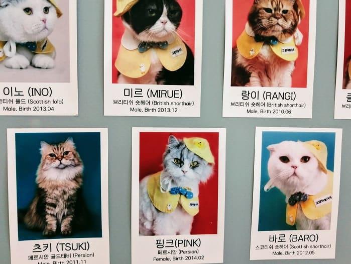 韓国明洞(ミョンドン)の猫カフェ