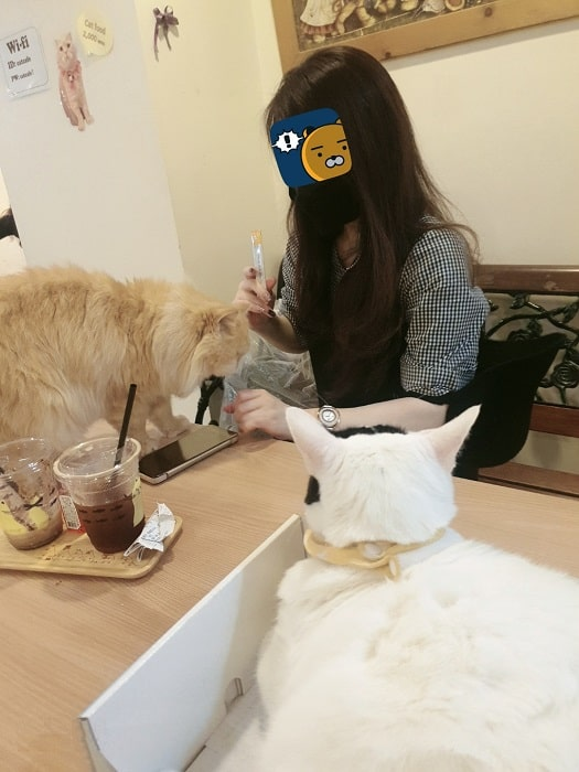 韓国明洞(ミョンドン)おすすめスポット猫カフェ