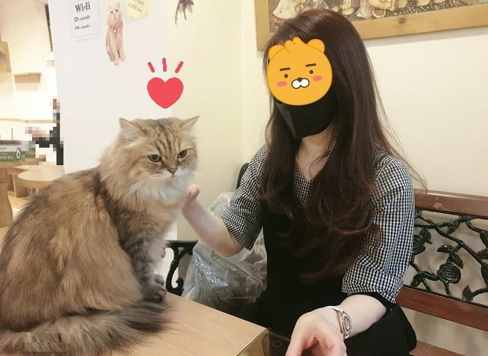 猫カフェ韓国明洞(ミョンドン)観光